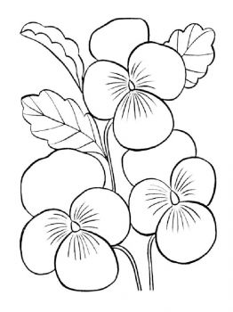 Violet-flower-coloring-pages-1