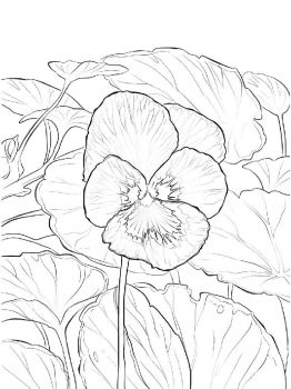 Violet-flower-coloring-pages-2