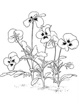 Violet-flower-coloring-pages-9