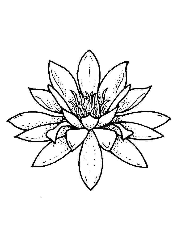 Free printable Water Lily coloring pages for kids