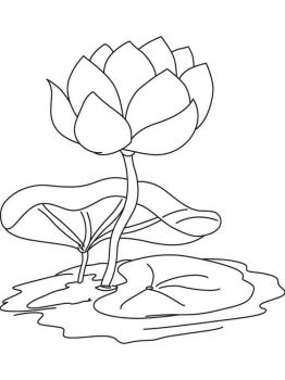 Water-lily-flower-coloring-pages-10