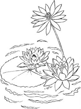 Water-lily-flower-coloring-pages-4