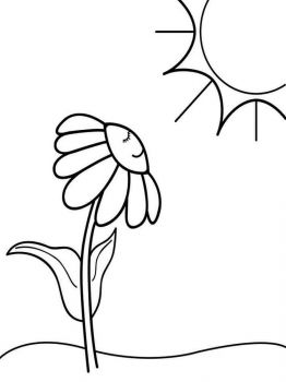 chamomile-flower-coloring-pages-12