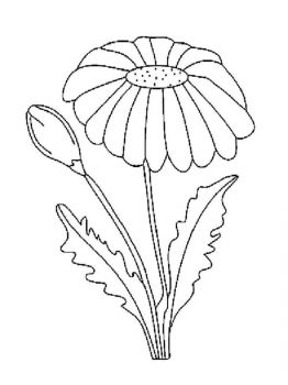 chamomile-flower-coloring-pages-2