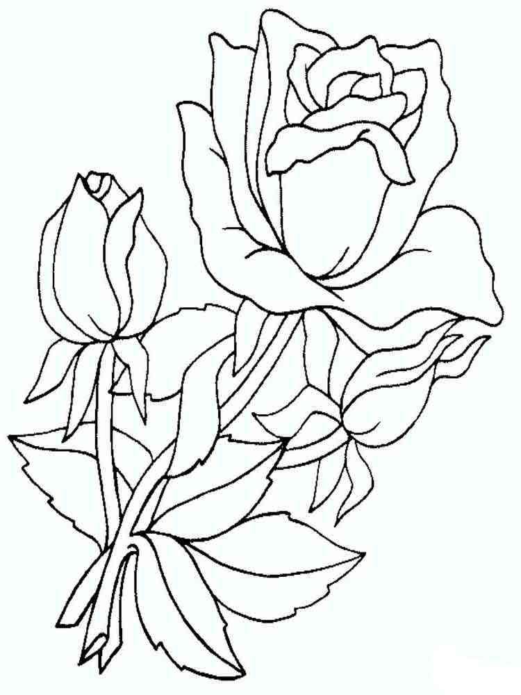 ausmalbilder rosen  malvorlagen kostenlos zum ausdrucken