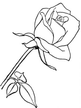rose-flower-coloring-pages-10