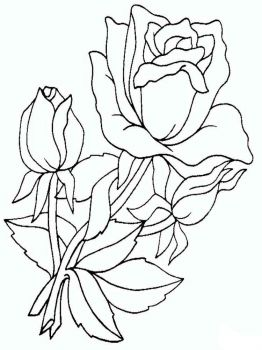 rose-flower-coloring-pages-13