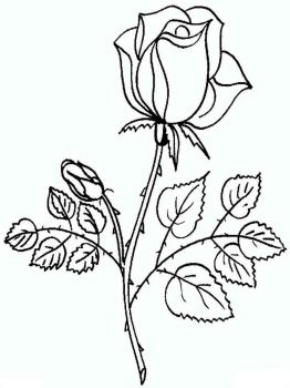 rose-flower-coloring-pages-16