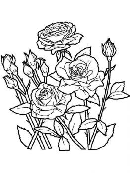 rose-flower-coloring-pages-7