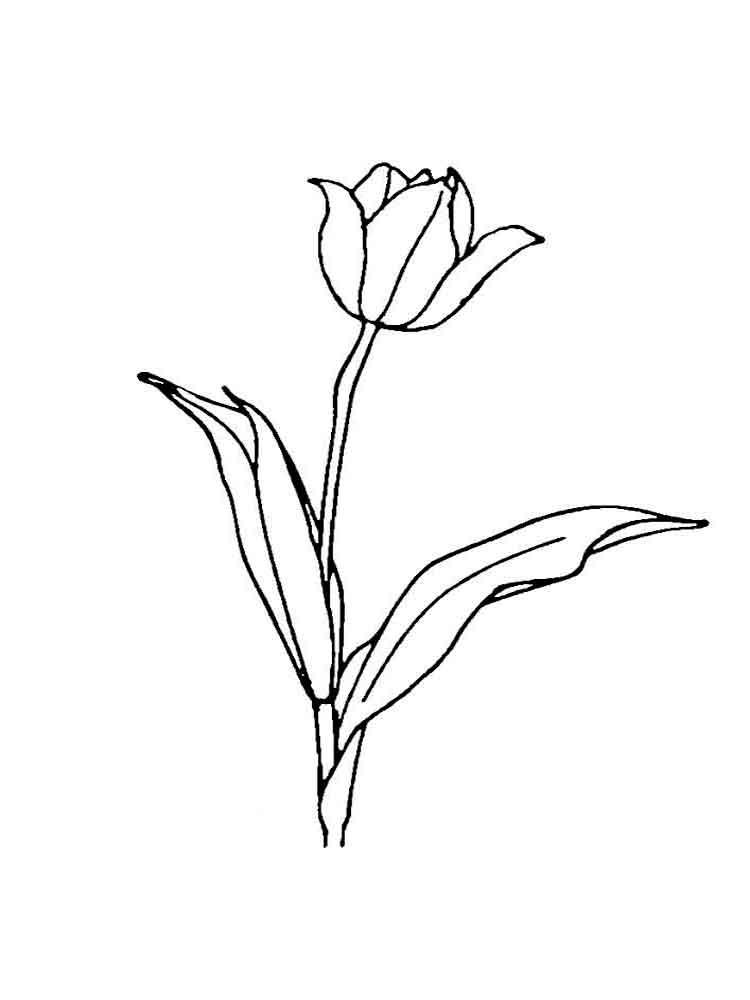 ausmalbilder tulpen - malvorlagen kostenlos zum ausdrucken
