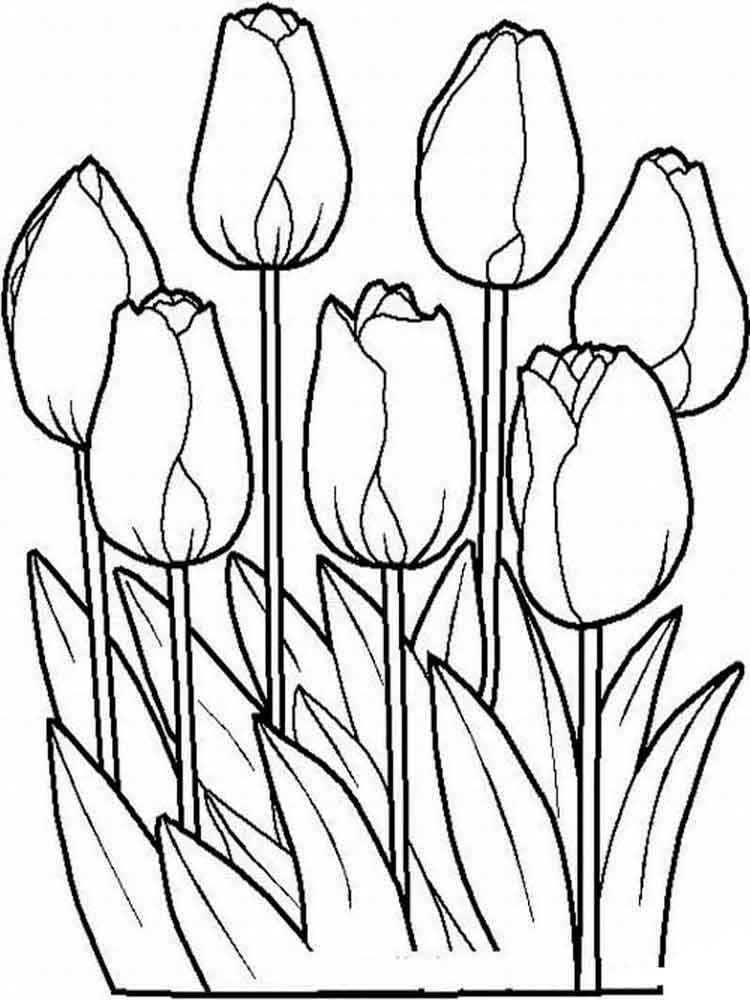 ausmalbilder tulpen  malvorlagen kostenlos zum ausdrucken
