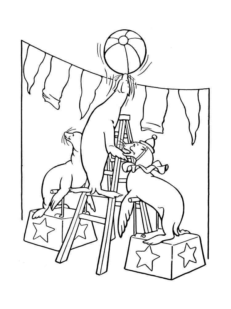 malvorlagen zirkus - ausmalbilder kostenlos zum ausdrucken