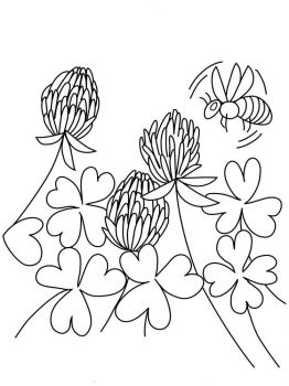 clover-coloring-pages-17