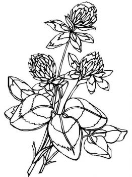 clover-coloring-pages-18