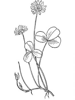 clover-coloring-pages-22