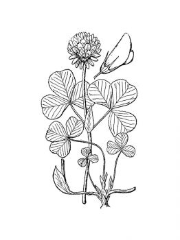 clover-coloring-pages-8