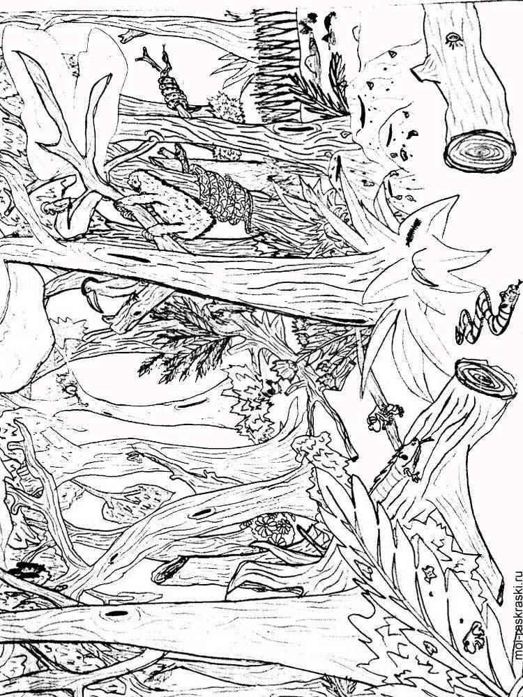 malvorlagen wald  ausmalbilder kostenlos zum ausdrucken