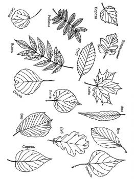 leaves-coloring-pages-14