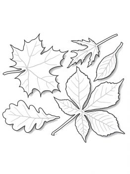 leaves-coloring-pages-3