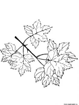 leaves-coloring-pages-36