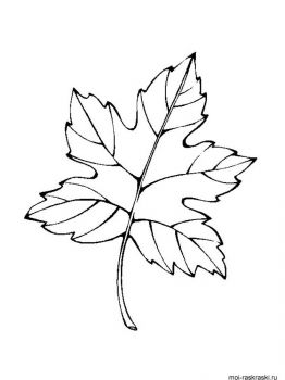 leaves-coloring-pages-37