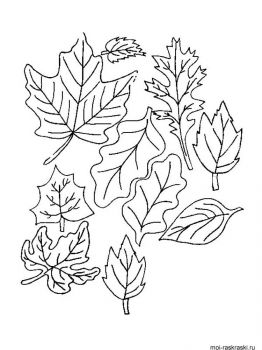 leaves-coloring-pages-38