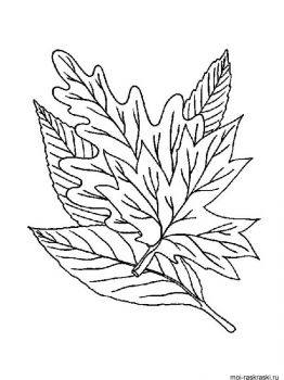 leaves-coloring-pages-39