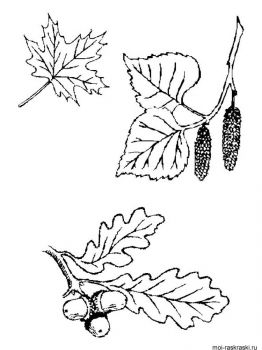 leaves-coloring-pages-40