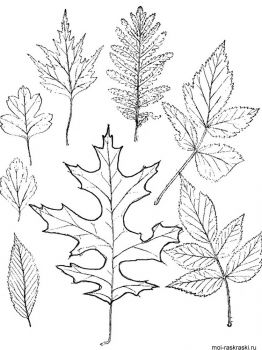 leaves-coloring-pages-43