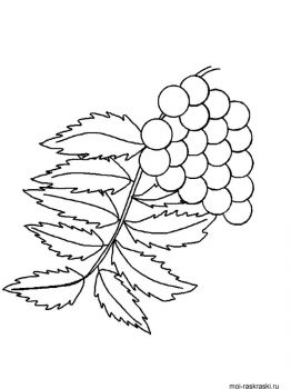 leaves-coloring-pages-48