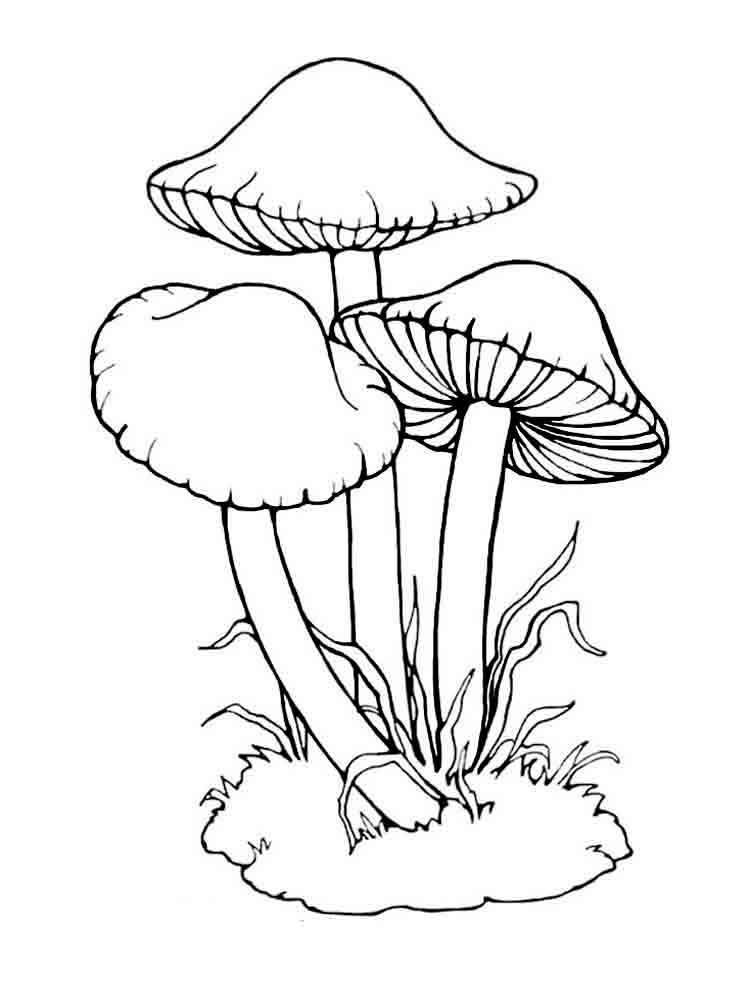 malvorlagen pilze  ausmalbilder kostenlos zum ausdrucken