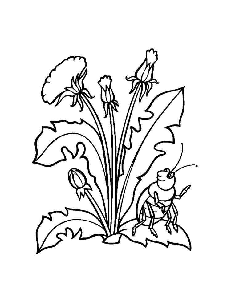 malvorlagen pflanzen  ausmalbilder kostenlos zum ausdrucken
