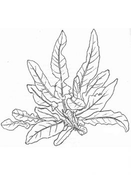 plants-coloring-pages-13