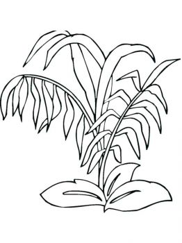 plants-coloring-pages-16