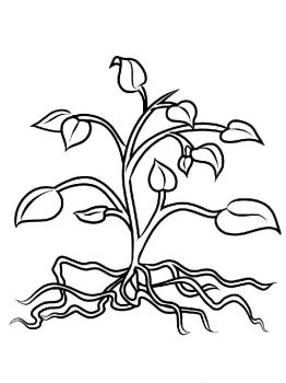plants-coloring-pages-27
