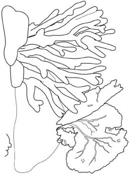 seaweed-coloring-pages-12
