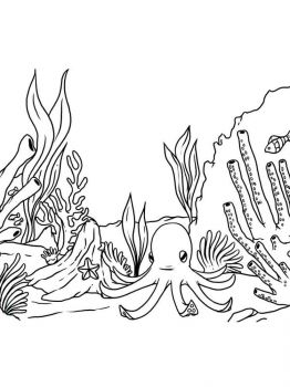 seaweed-coloring-pages-13