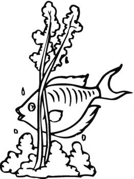 seaweed-coloring-pages-17