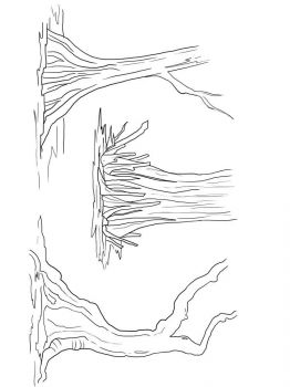swamp-coloring-pages-1