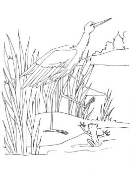 swamp-coloring-pages-13
