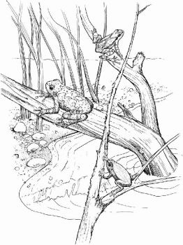 swamp-coloring-pages-5