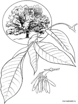 ash-tree-coloring-pages-4