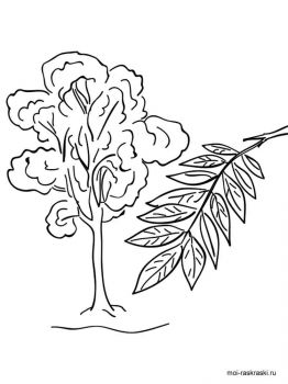 ash-tree-coloring-pages-5