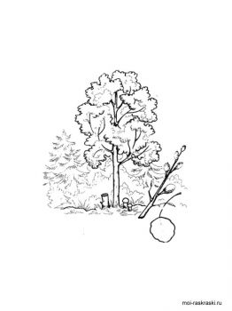 aspen-tree-coloring-pages-3