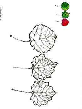 aspen-tree-coloring-pages-5