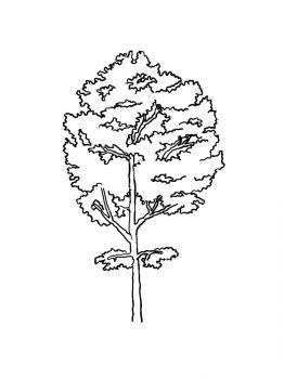 aspen-tree-coloring-pages-6
