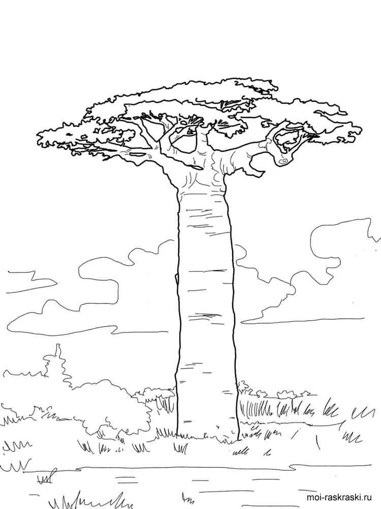 malvorlagen affenbrotbaum  ausmalbilder kostenlos zum