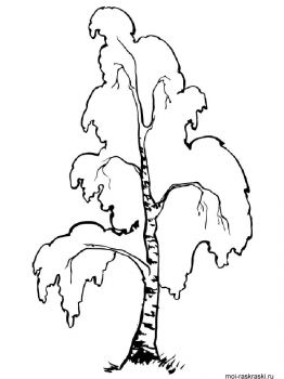 birch-tree-coloring-pages-12