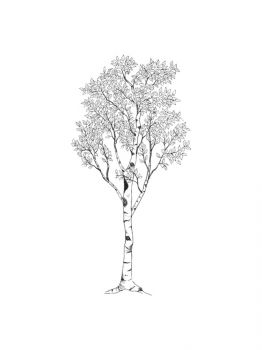 birch-tree-coloring-pages-15