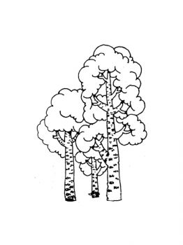 birch-tree-coloring-pages-18